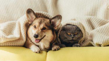 猫が最高のペットである理由